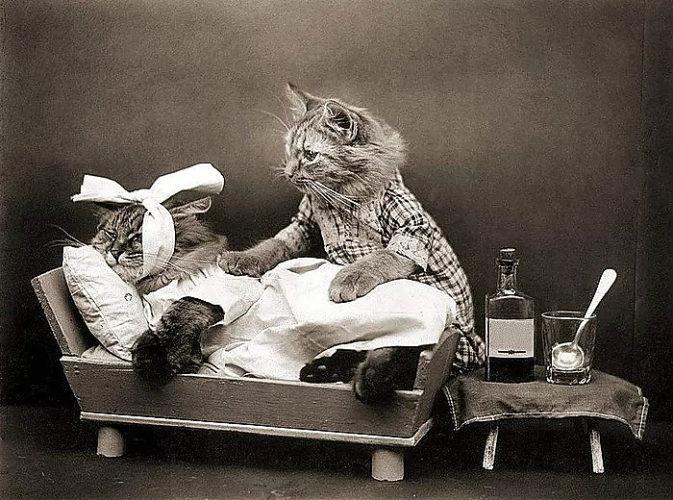 солнечная панель картинки выздоравливай скорее котик экрана поставьте