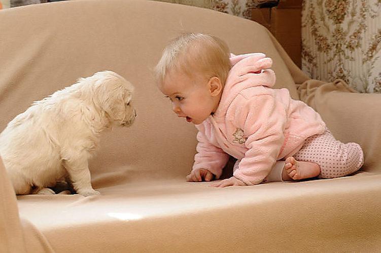 Прикольные картинки с надписями про животных для детей