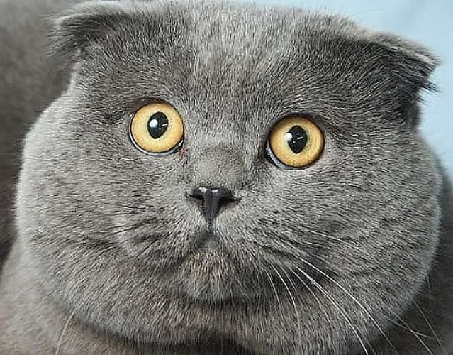Прикольные картинки котиков с надписями