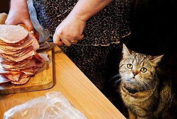 Смешные картинки жадина говядина