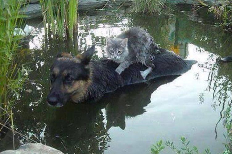 картинка как животные помогают друг другу это время из-за