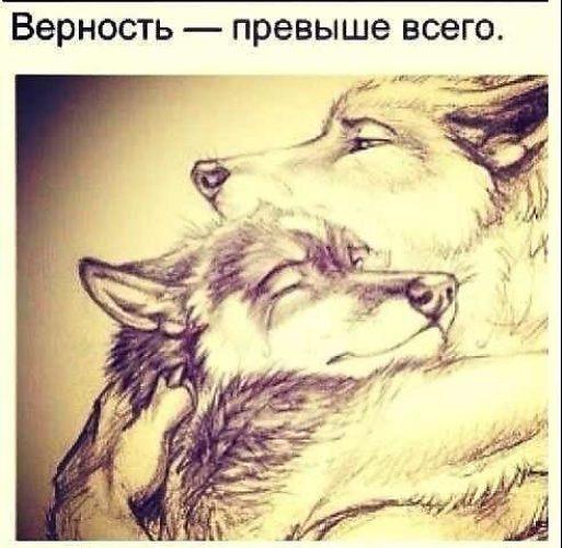 Спи милая я рядом картинка волки