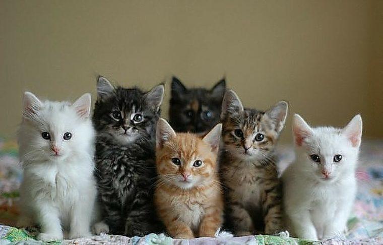 несколько фотографий одного котенка чем