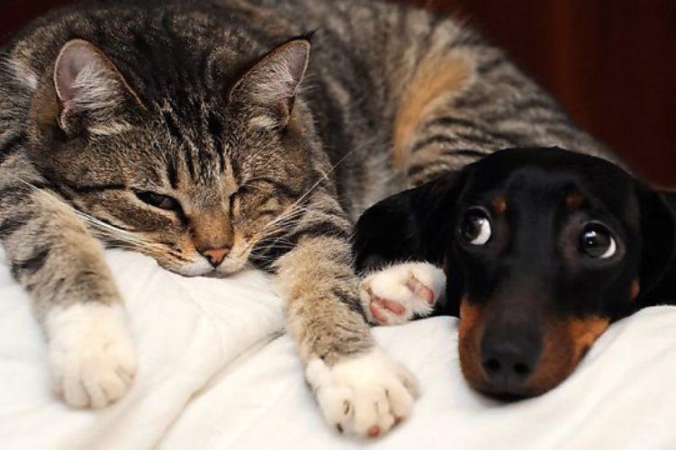 Картинки поздравления, картинки кошка с собакой с надписями