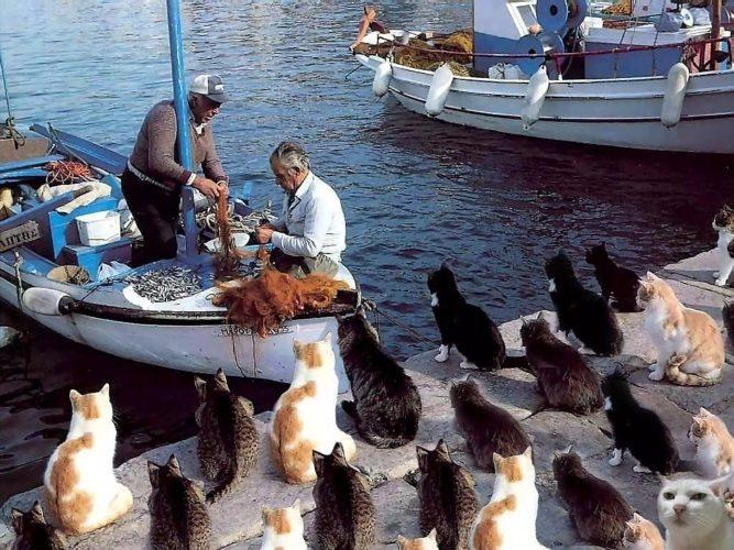 Для, прикольные картинки рыбаки и рыбнадзор