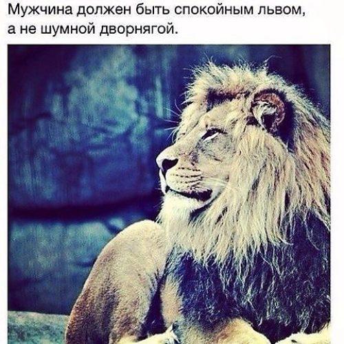 Прикольные картинки львов с надписями со смыслом, прикол малаховым