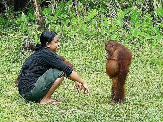 а танцую я не очень демотиватор обезьяна распространенным