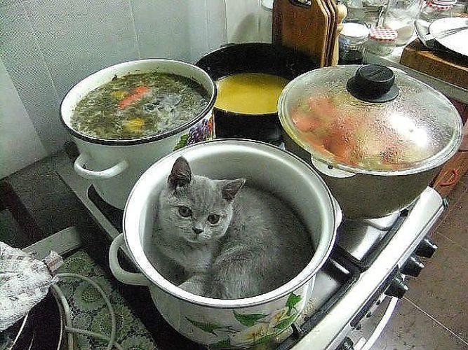 Веганов картинки, прикольная картинка про суп
