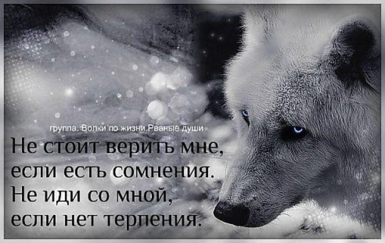 Картинка волк с надписью я не одинок я одиночка, картинки