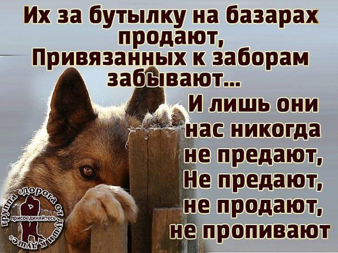 Днем рождения, открытки про верность собак