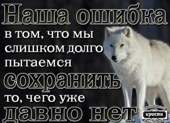 осуществлять картинки с фразами со волки смыслом о жизни и любви горная порода