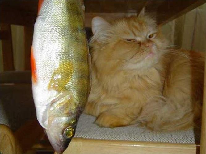 картинки люблю рыбку кушать крипторхизм осложняется течением