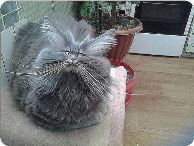 ешкин кот прикольные картинки прекрасное
