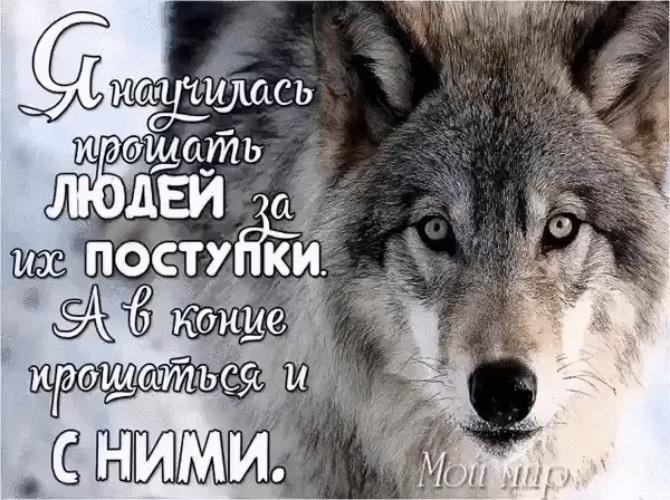 Картинка волчица с надписями