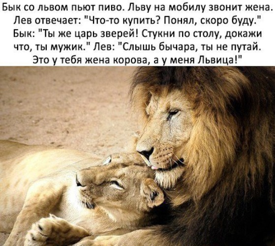 Картинки львицы с надписями со смыслом