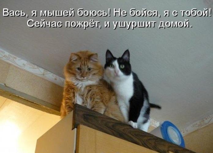 Кот вася картинки с надписями