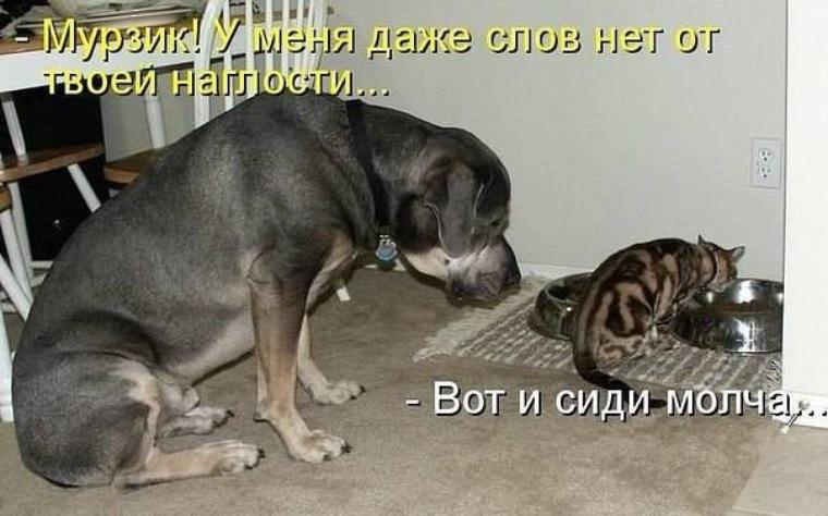 Картинки и фото кошек и собак с надписями