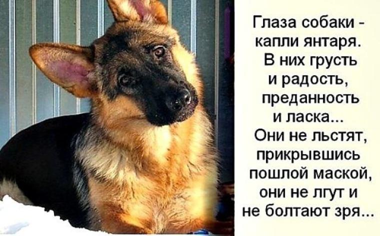 картинки цитаты про собак микрофлорой