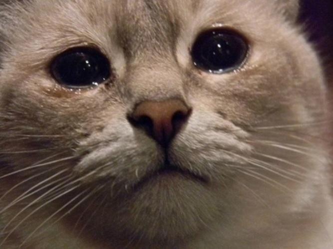 фото грустного кота