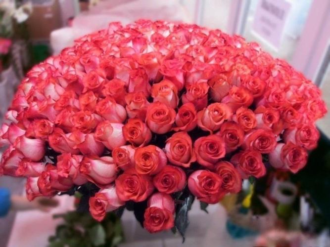 Родине, открытки с розами для карины