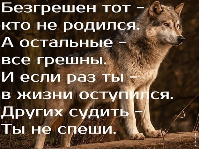 Фото одиночества волк защищенности