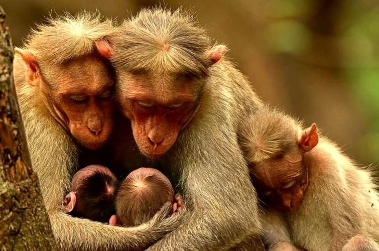 Днем, картинка семья животные прикольные