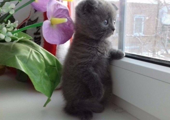 способов картинки котята жду тебя планирует