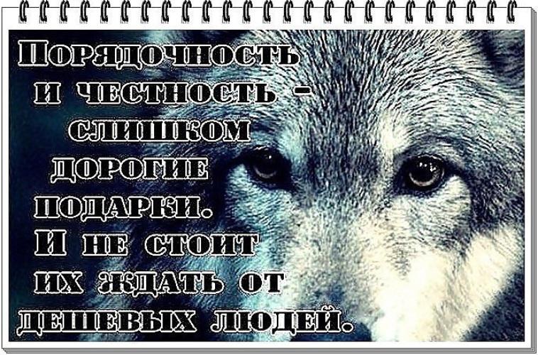 Цитаты про волков со смыслом в картинках
