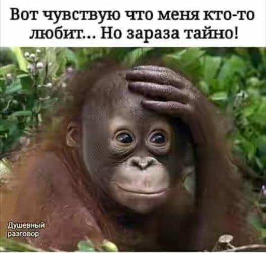 Лента по интересам - Юмор - 1499638 - Tabor.ru
