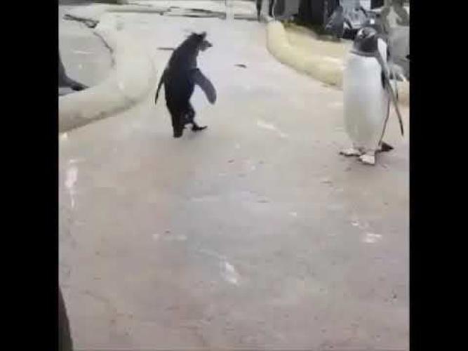 гифка пингвин сегодня будет туса изнаночные лицевые