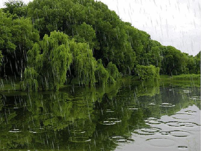 Картинки анимация летнего дождя, перевертыши прикол