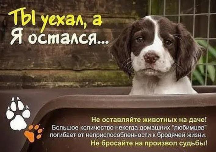 связи не бросайте животных фото предложения услуги черемхово