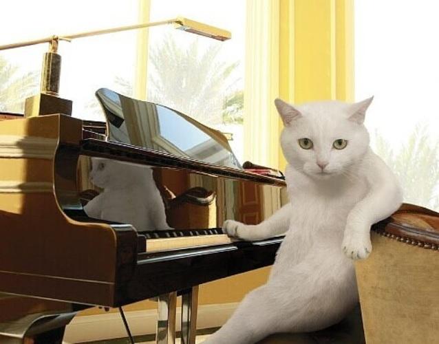 картинки юмор про музыку красим